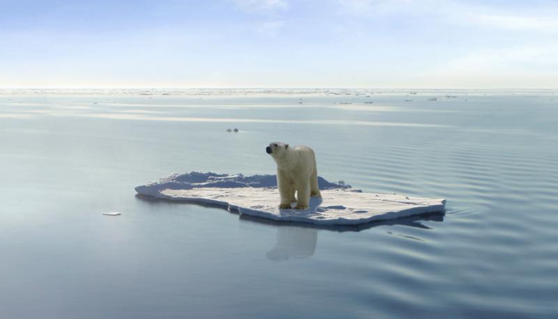 Polar-bears-52