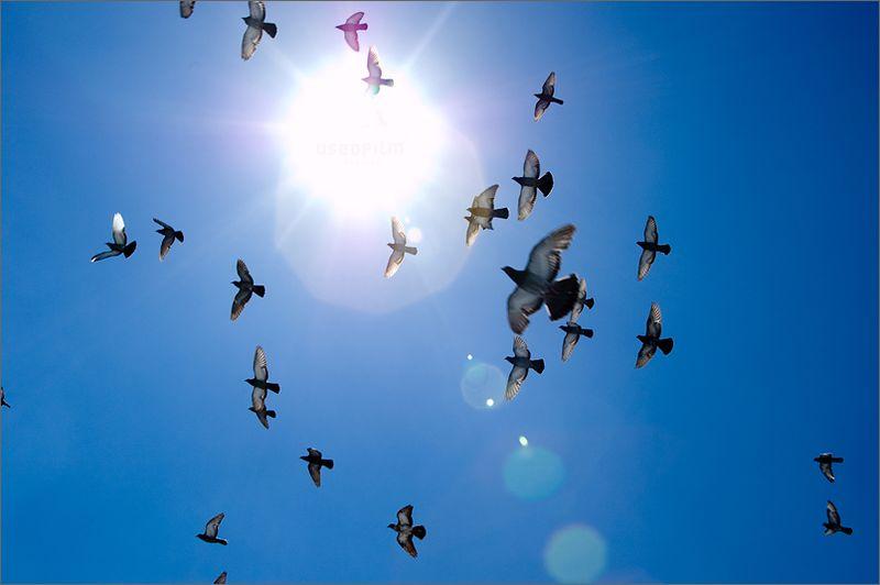 Birds_flying